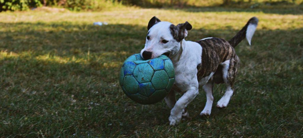 kompensacja ugryzienia psa